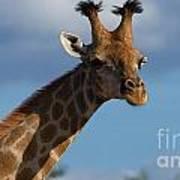 Stylish Giraffe Poster