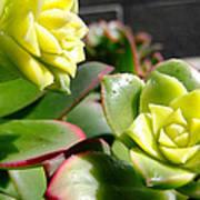 Succulent Bloom Poster