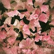 Sugared Sweetpeas Poster