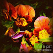 Sultry Nights - Flower Photography Poster