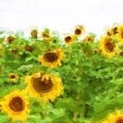 Sultry Sunflowers Poster