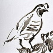 Sumi-e Quail Poster by Beverley Harper Tinsley