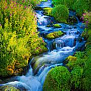 Summer Cascade Poster