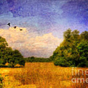 Summer Country Landscape Poster