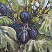 Summer Figs II Poster