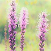 Summer Flowers Of The Blue Ridge Parkway II Poster