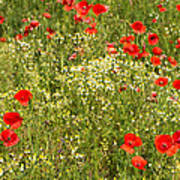 Summer Meadow Background Poster