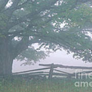 Summer Morning Fog Poster