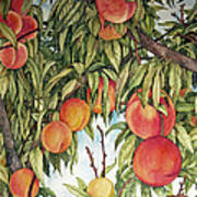 Summer Peaches Poster by Helen Klebesadel