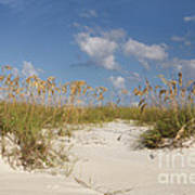 Summer Sea Oats Poster
