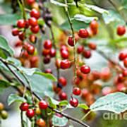 Summer Wild Berries Poster