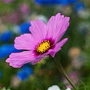 Summer Wild Blooms Poster