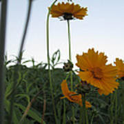 Summer Wild Flowers Poster
