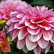 Summertime Blossoms Poster