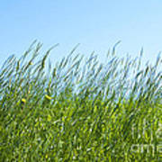 Summertime Grass Poster