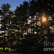 Sun Burst Through The Trees Poster