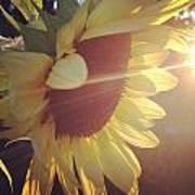 Sun Catcher Poster