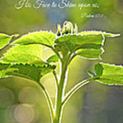 Sun Drenched Sunflower With Bible Verse Poster by Debbie Portwood