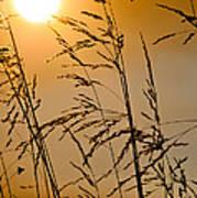 Sun Flood Poster