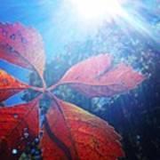 Sun Leaf Poster