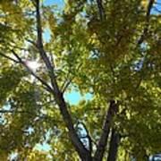 Sun Leaves Poster