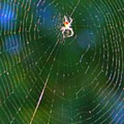 Sun Spider In Rainbow Web Poster
