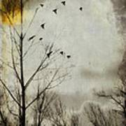 The Sun Splashed Unto A Gray Day Poster