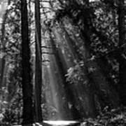 Sun Through The Trees Poster