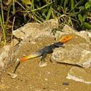Sunbathing Lizard Poster