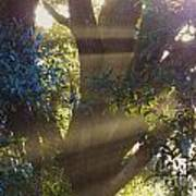 Sunbeams In The Tree Poster