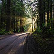 Sunburst At Redwood National Park Poster