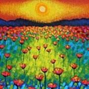 Sunburst Poppies Poster