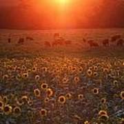 Sundown On Buttonwood Farm Poster by Andrea Galiffi