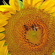 Sunflower And Bees Poster