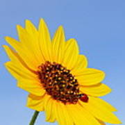 Sunflower And Ladybird Beetle 2am-110488 Poster