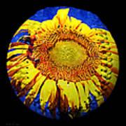 Sunflower Baseball Square Poster