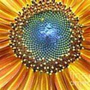 Sunflower Center Poster