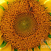 Sunflower Close-up Poster