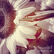 Sunflower Digital Art Poster