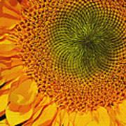 Sunflower Digital Painting Poster