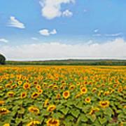 Sunflower Field New Jersey Poster