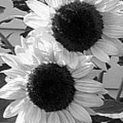 Sunflower From The Color Fashion Mix Poster