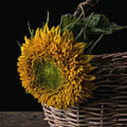 Sunflower In A Basket Poster