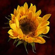Sunflower Opening Poster