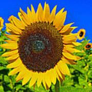 Sunflower Power Poster