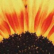 Sunflower Rise Poster