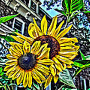 Sunflower Under The Gables Too Poster