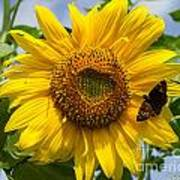 Sunflower With Butterfly Poster