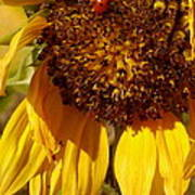 Sunflower With Ladybug Poster
