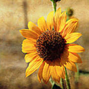 Sunflower With Texture Poster